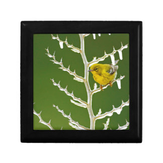 A Male Pine Warbler Perched on an Icy Branch Gift Box