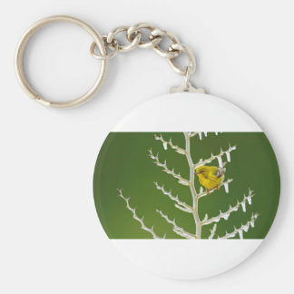 A Male Pine Warbler Perched on an Icy Branch Key Ring