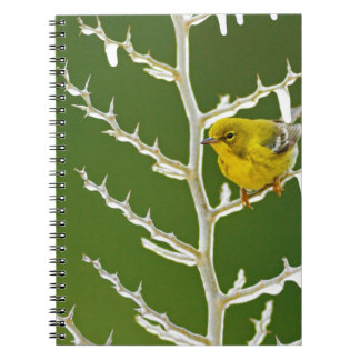 A Male Pine Warbler Perched on an Icy Branch Notebook