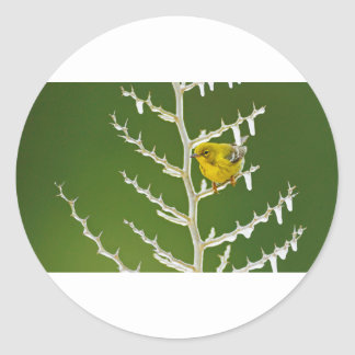A Male Pine Warbler Perched on an Icy Branch Round Sticker