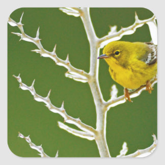A Male Pine Warbler Perched on an Icy Branch Square Sticker