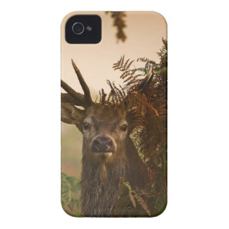 A Male Red Deer Blends in London's Richmond Park. iPhone 4 Case-Mate Case