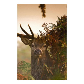 A Male Red Deer Blends in London's Richmond Park. Stationery