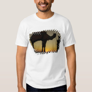 a man and his camel Silhouetted at sunset on the Tshirt