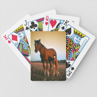 A mare and her foal poker deck