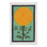 A Marigold, from the Small Clive Album (w/c on pap Poster