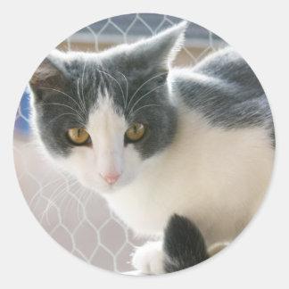 A Max And Mantle Bi Colour Cat Classic Round Sticker