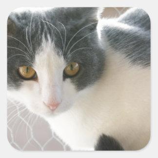 A Max And Mantle Bi Colour Cat Square Sticker
