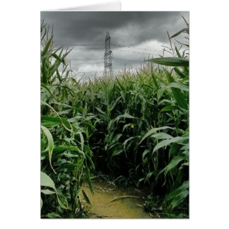 A maze of maize greeting card
