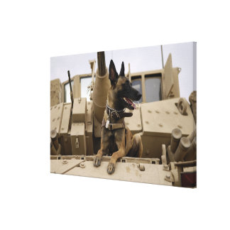 A military working dog sits on a M2A3 Stretched Canvas Print