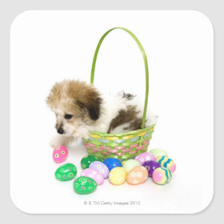 A mixed breed puppy sitting in an Easter basket Square Sticker