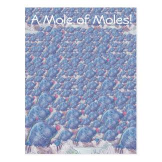 A Mole of Moles Cartoon Avogadro Constant Postcard