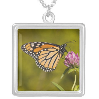 A monarch butterfly, Danaus plexippus, on clover Necklaces