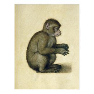 A Monkey Postcard