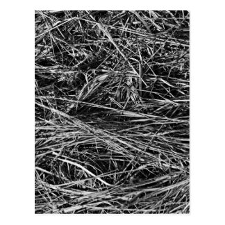 A monochrome photo of grass postcard