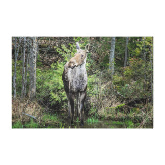 A Moose in the Forest Canvas Print