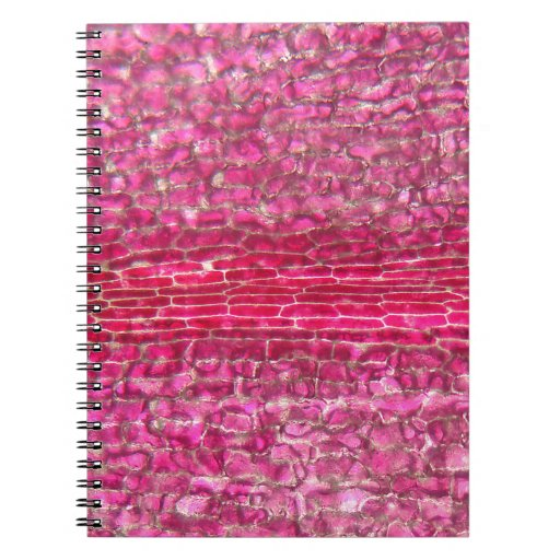 A morning glory flower under the microscope spiral note book