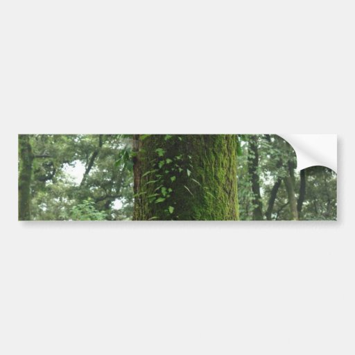 A moss covered beautiful tree bumper stickers