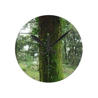 A moss covered beautiful tree wallclocks