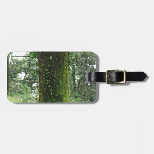 A moss covered beautiful tree travel bag tags