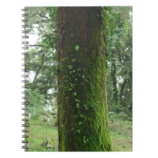 A moss covered beautiful tree note books