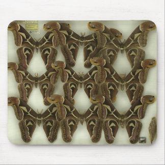 A moth mousepad