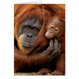 A mother and baby orangutan share a hug. card