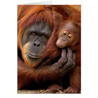 A mother and baby orangutan share a hug greeting card