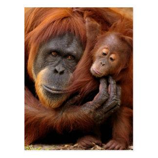 A mother and baby orangutan share a hug. post card