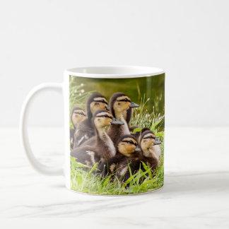 A Mug of Ducklings