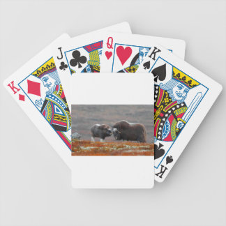 A Musk Ox and Calf Poker Deck