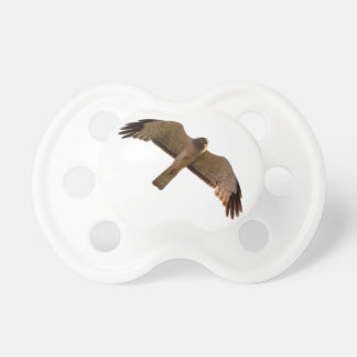 A Northern Harrier soars overhead Baby Pacifiers