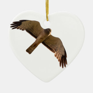 A Northern Harrier soars overhead Ceramic Ornament