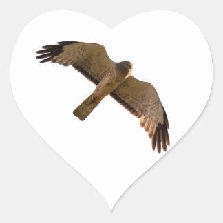 A Northern Harrier soars overhead Heart Sticker