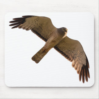 A Northern Harrier soars overhead Mouse Pad