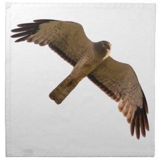 A Northern Harrier soars overhead Napkin