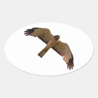 A Northern Harrier soars overhead Oval Sticker