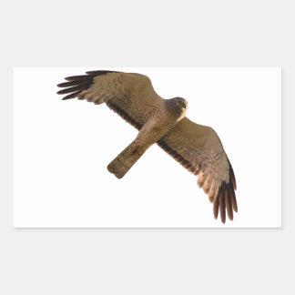 A Northern Harrier soars overhead Rectangular Sticker