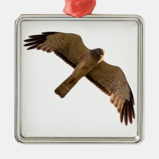 A Northern Harrier soars overhead Silver-Colored Square Decoration