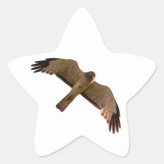 A Northern Harrier soars overhead Star Sticker