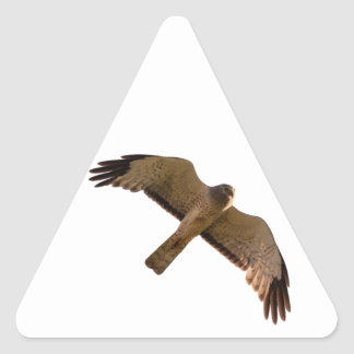 A Northern Harrier soars overhead Triangle Sticker