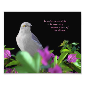 A Northern Mockingbird on a Black Background Photo Print
