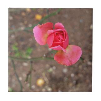 A November rosebud Small Square Tile