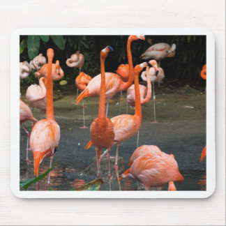 A number of Flamingos Mousepads