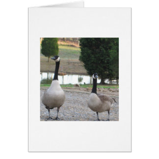 A Pair Of Canada Geese Card