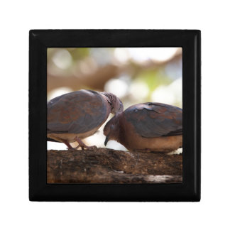 A pair of laughing doves small square gift box