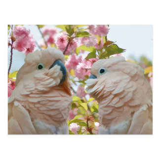 A Pair of Parrots and Crab Apple Blossoms Postcard
