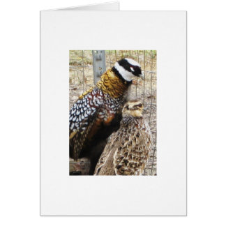 A Pair Of Reeves Pheasants Card