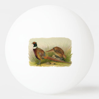 A pair of Ring necked pheasants in a grassy field Ping Pong Ball