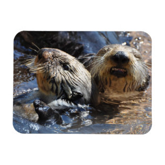 A Pair of Sea Otters Rectangular Photo Magnet